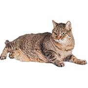 Geriatric - Cat Age