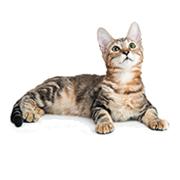 Junior - Cat Age