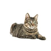 Mature - Cat Age