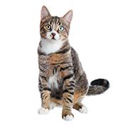 Prime - Cat Age