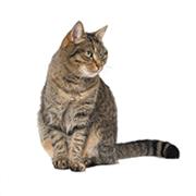 Senior - Cat Age